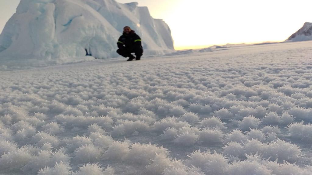"""Esas extrañas """"flores"""" que embellecen la Antártida Argentina"""