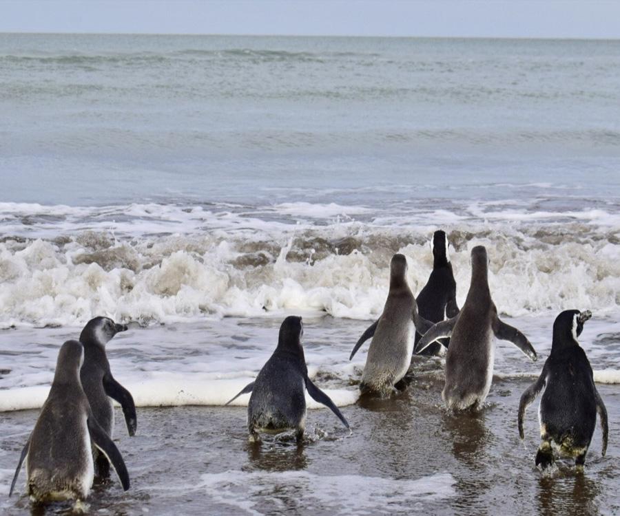Video: el Puerto de Bahía Blanca acompañó la liberación de pingüinos en Monte Hermoso