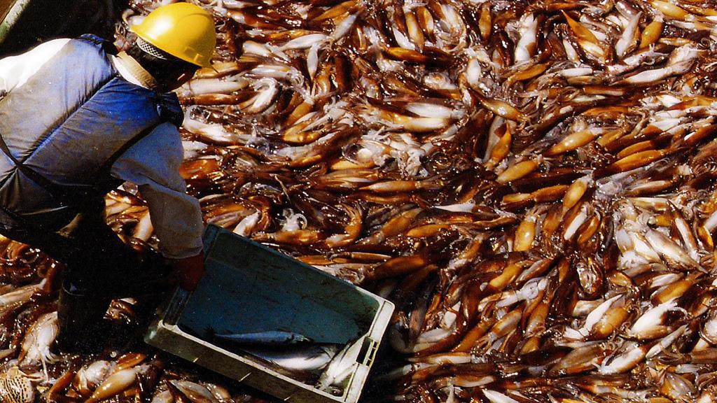 Agricultura promueve una mayor presencia de buques pesqueros nacionales en la milla 201